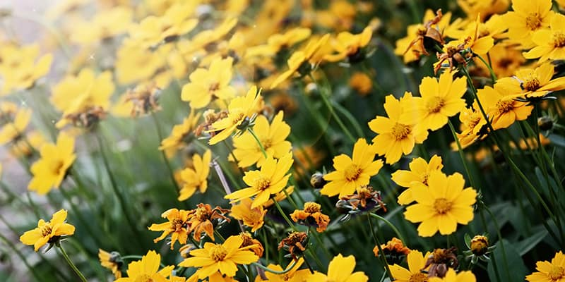 Wildflowers: The Smart Landscaping Choice in Florida