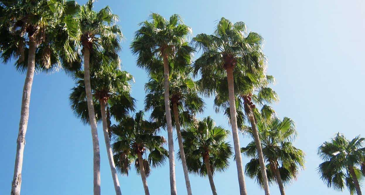 Top 5 Secrets for Keeping Your Florida Palm Trees Healthy