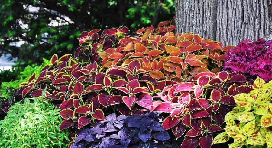 Plant Fall Colors in Your Yard