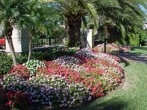 Impatiens For Your Fort Myers Property R Amp R Sprinkler