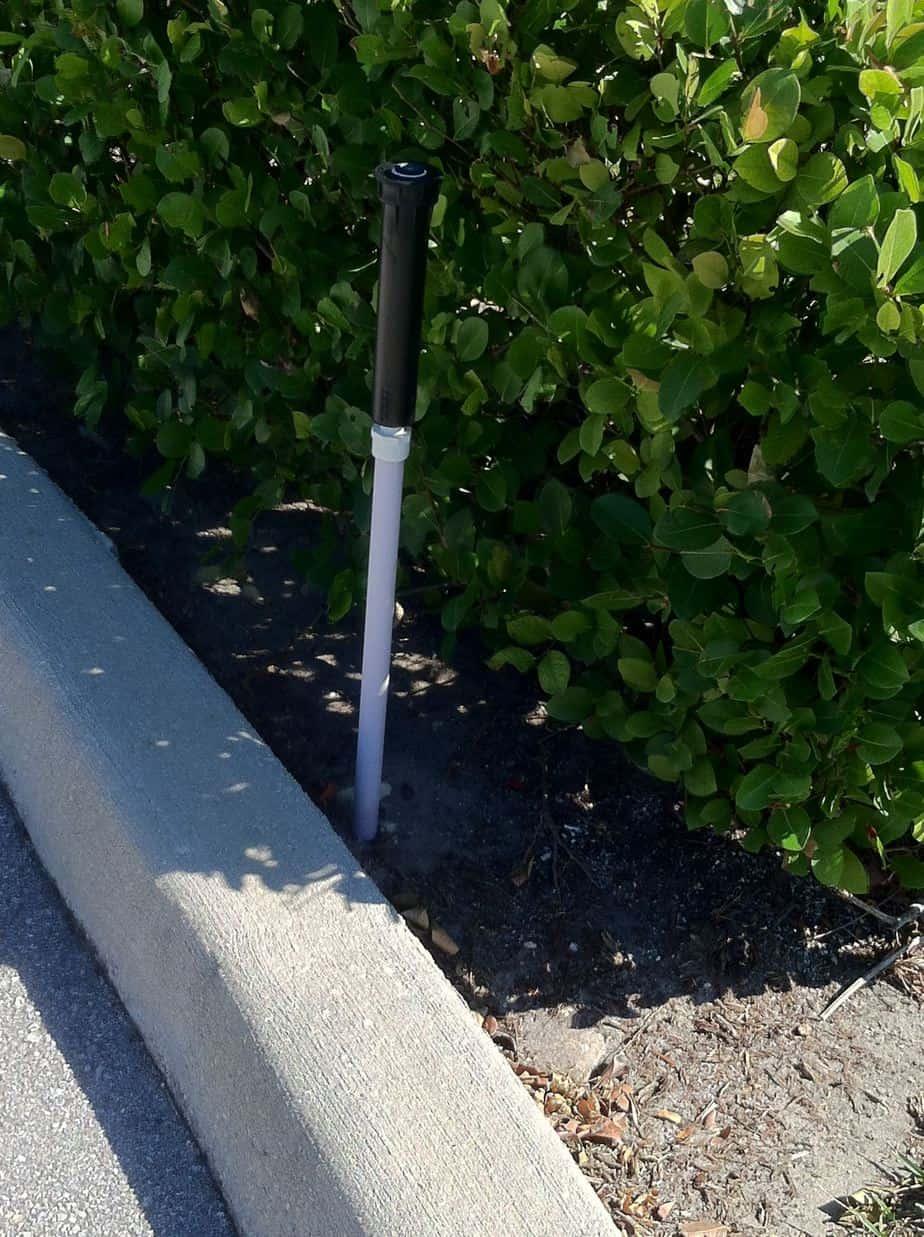 Higher Shrubs Require Taller Sprinkler Heads - R & R Sprinkler
