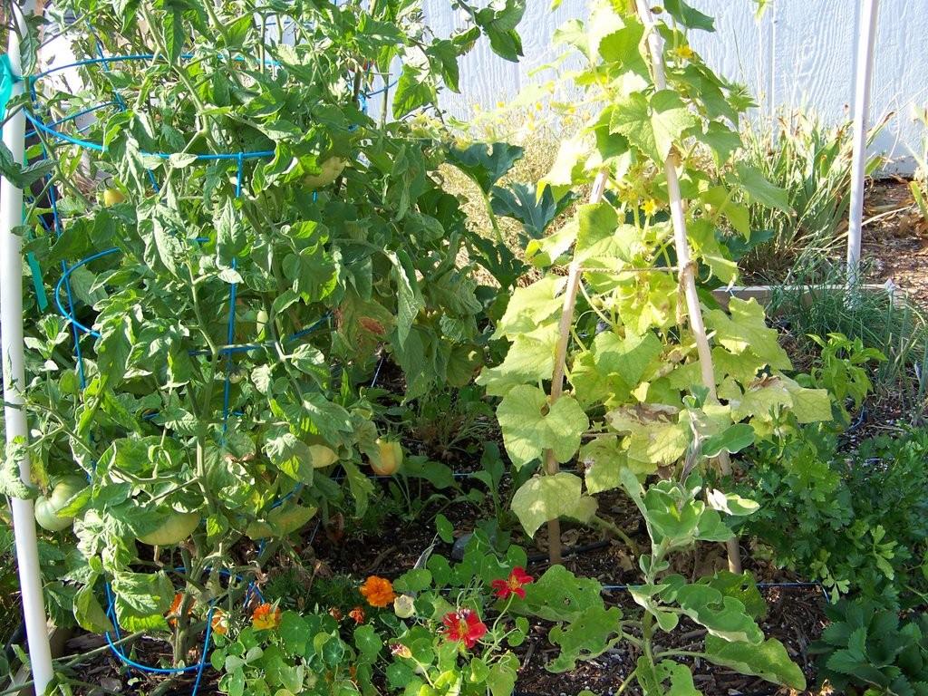 Vertical-Gardening,-Part-2-of-3