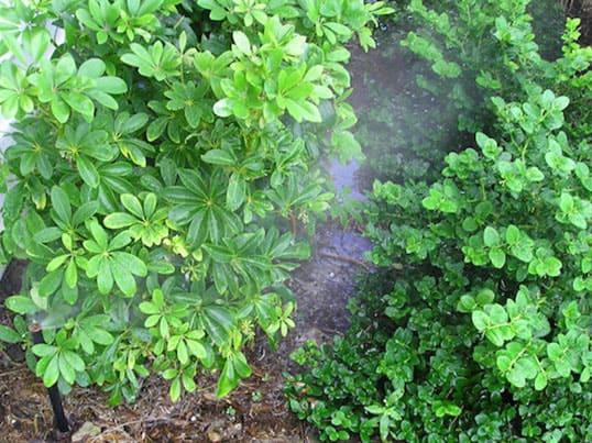 Sprinkler System or irrigation for planted areas