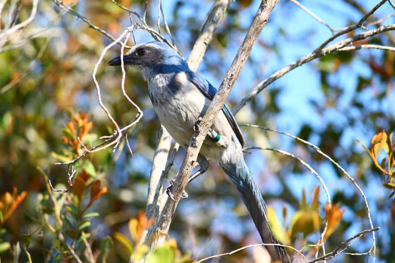 Attracting Birds to Your Florida Garden