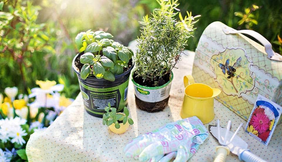 Spring Gardening in Southwest Florida