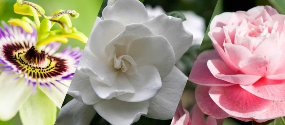 10 Of The Most Fragrant Plants For Your Florida Garden