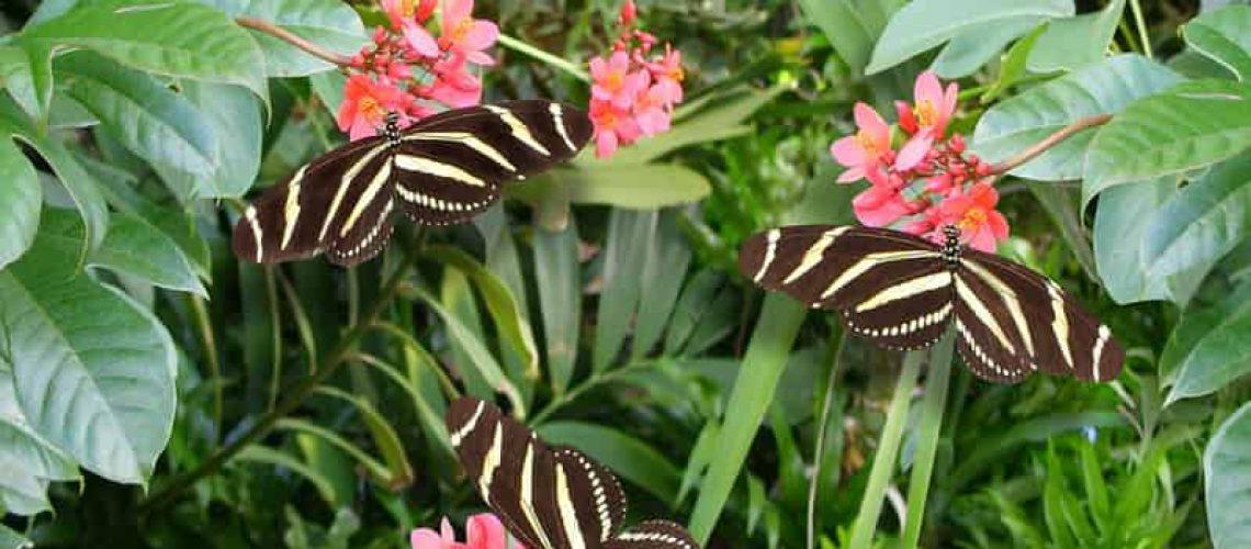 Creating a Floridian Butterfly Garden