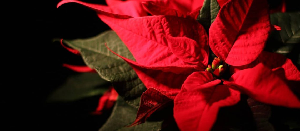 Holiday Landscaping in Cape Coral