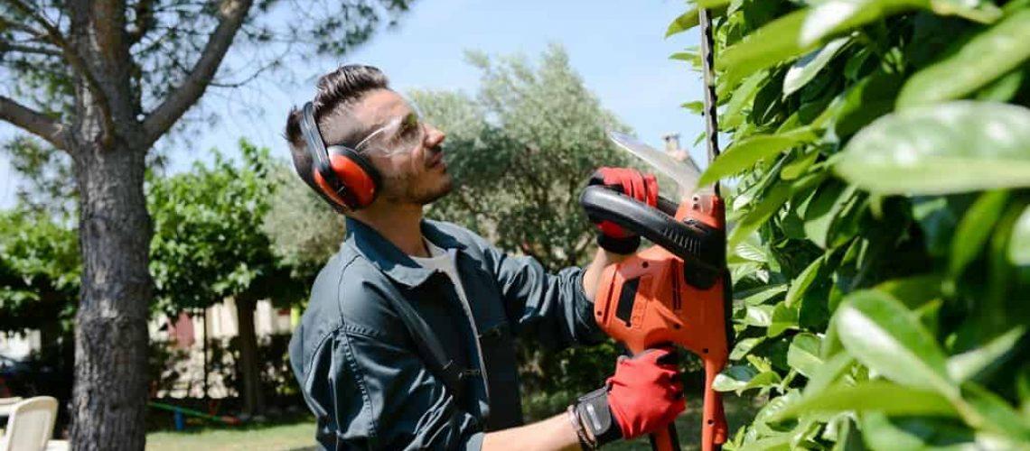handsome young man gardener trimming hedgerow in park outdoor