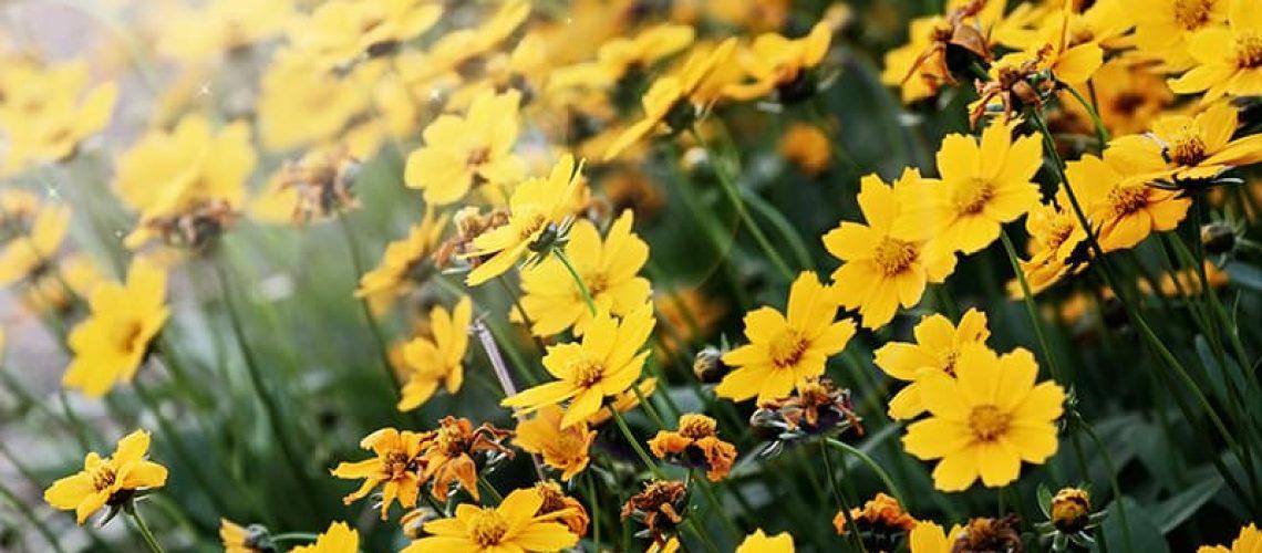 Wildflowers in Florida