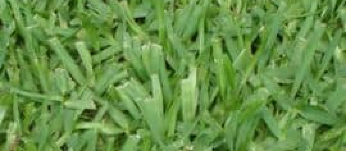 floratam-grass